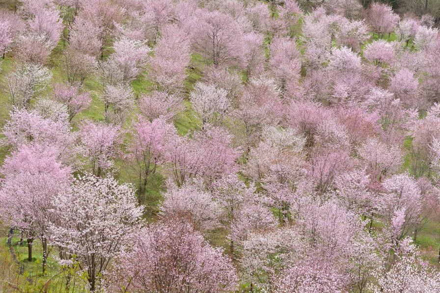 160427_spring_fever_1
