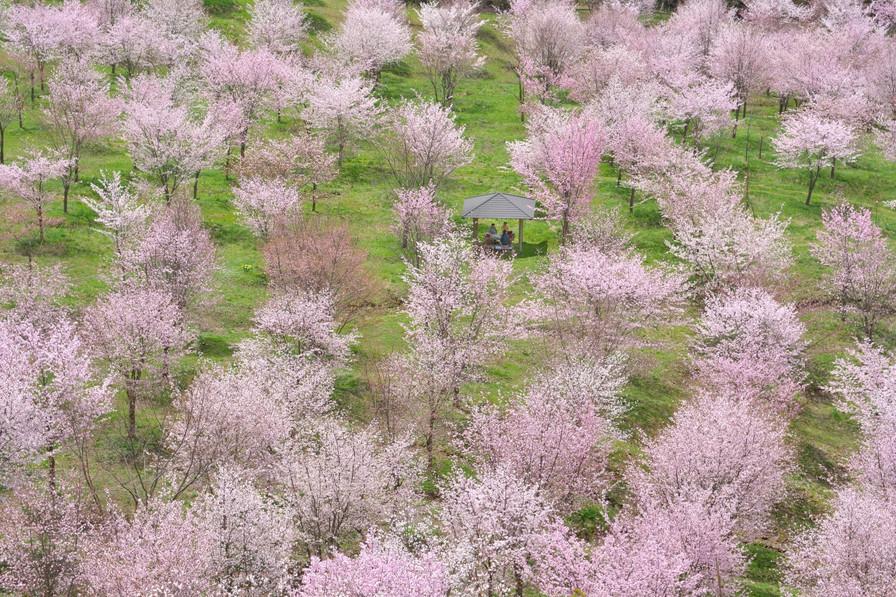 160427_spring_fever_2